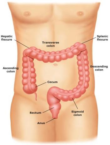 The Digestive System And Urinary Tracts Stomaatje Com