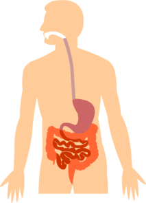 The digestive system and urinary tracts stomaatje source zin gezond ccuart Image collections
